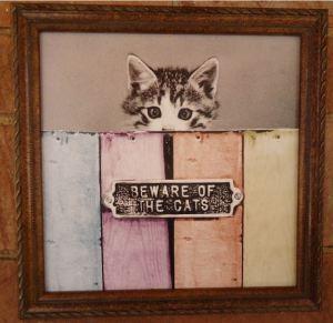 beware cats