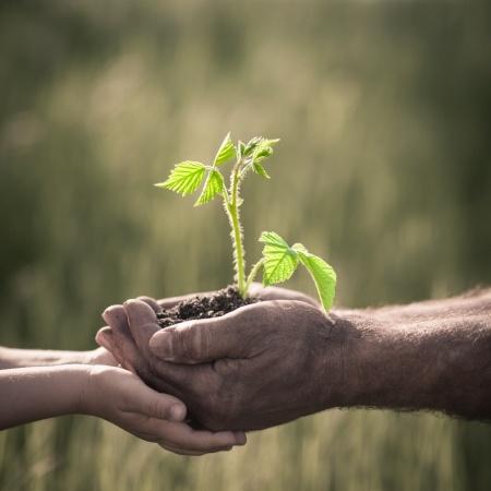 soil plant hands